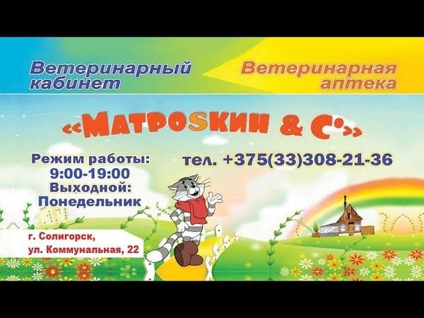 СТК. Ветеринарный кабинет Матроsкин С