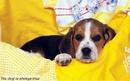 Для своей собаки каждый из нас — Наполеон; вот почему люди так любят собак.