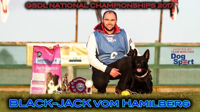 GSDL National Championship Ross Heron Black Jack vom Hamilberg B Obedience 2017