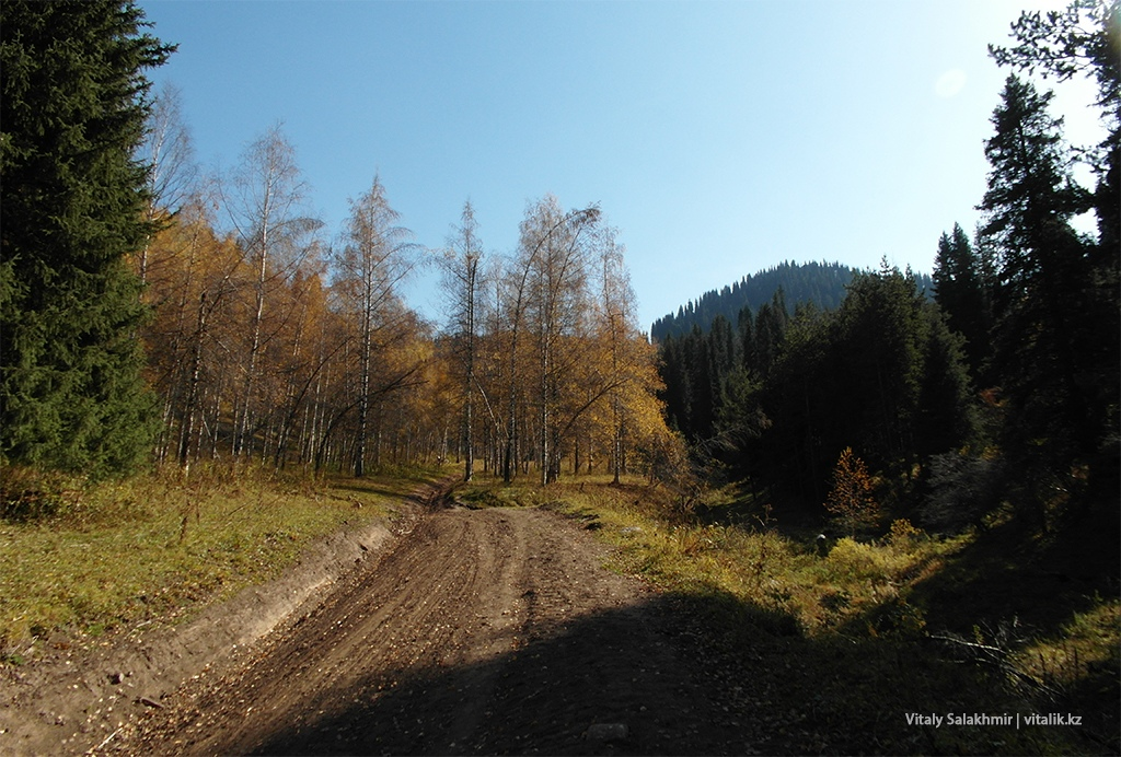 Дорога лес Бутаковка 2018