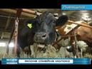 Якісне молоко з власної ферми. Львівський досвід сімейного бізнесу