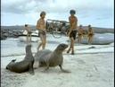 16 1971 Галапагосские драконы Подводная одиссея команды Кусто