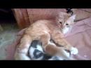 Святое семейство. Настя с котятами