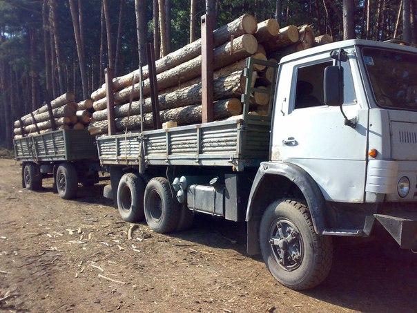 Недалеко от села Хасаут-Греческое полицейские задержали два «КАМАЗа» перевозивших 30 кубометров древесины