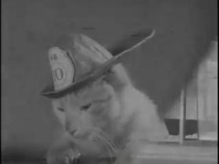 Кот-спасатель