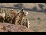 Animaux Trop Humains - L'Adoption Animale