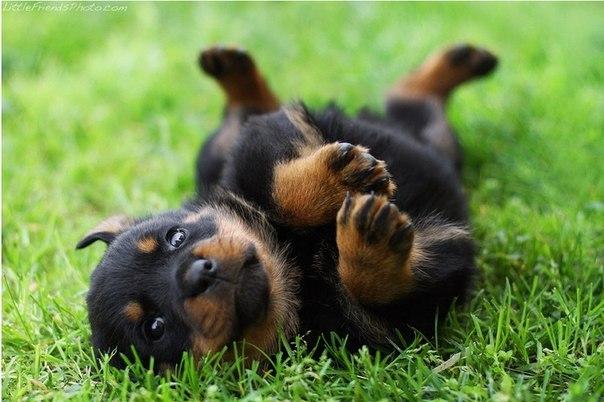 Воспитание щенка - Страница 2 Ry8bTMqBKCc