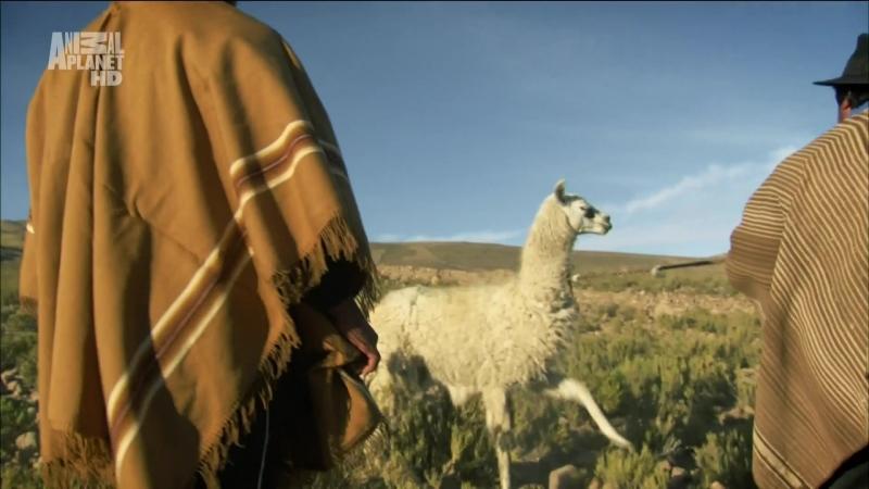 В дебрях Латинской Америки 2 серия Анды Мир в облаках