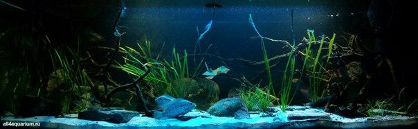 Конкурс дизайна биотопных аквариумов JBL 2014 Ejz-7W5v_cw