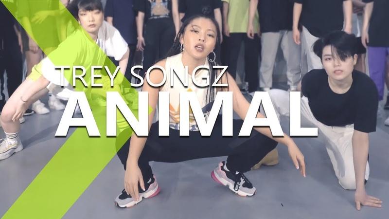 Trey Songz - Animal LIGI Choreography.