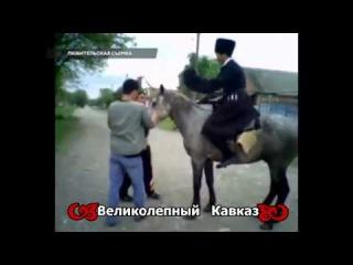 В Дагестане даже Конь борцуха