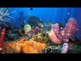 Футаж заставка Коралловые рыбки.(Coral fish screensaver footage.)