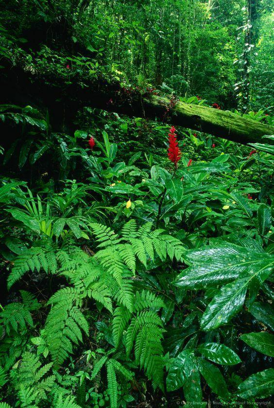 Амазонские тропические леса в 9 раз больше штата...