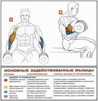 Подъем гантелей на бицепс сидя одно из лучших упражнений для наращивания силы и оттачивания формы бицепсов.