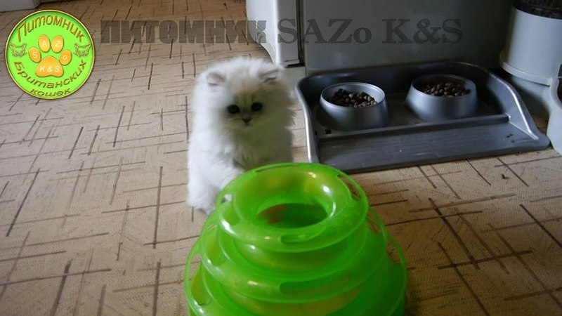 Kyla SAZo KS играет