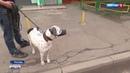 Вести-Москва • Нападение бойцовой собаки в столице хозяин задержан, а потом отпущен