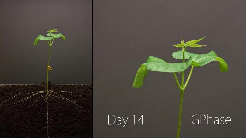 Тайна Жизни (миги жизни) ''ШэнМин дэ Ми''... Bean Time-Lapse - 25 days ¦ Soil cross section BONUS clip ¦ Bean time-lapse.