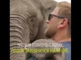 Доктор, который дарит животным вторую жизнь