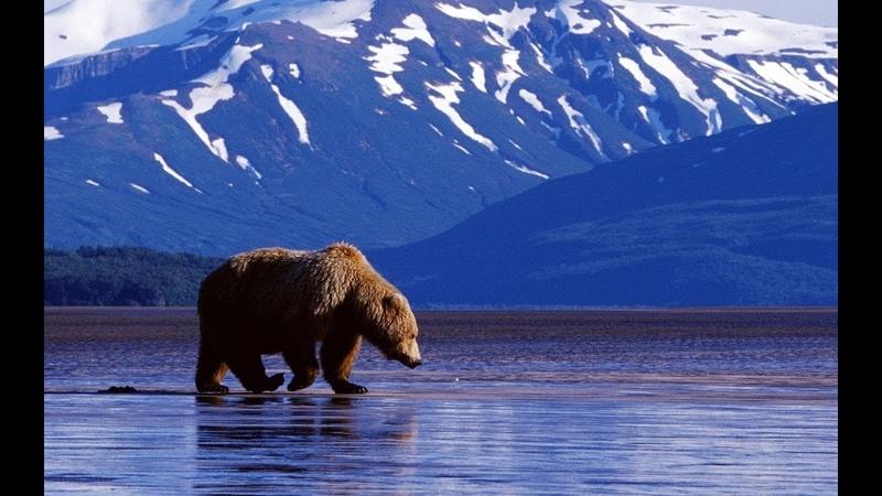 Nat Geo Wild Аляска рай гризли 1080р