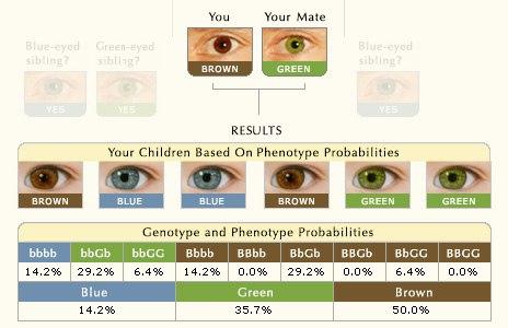 Цвет глаз как определить свой цвет