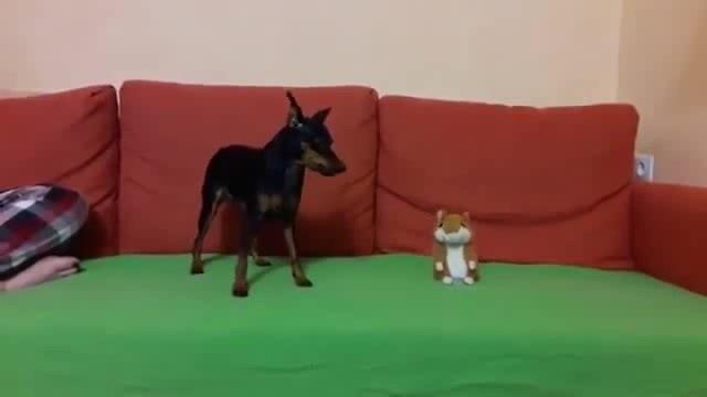 разговор собаки с игрушкой