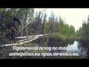 Одиночный поход по тайге переправа, медведи, один в лесу.