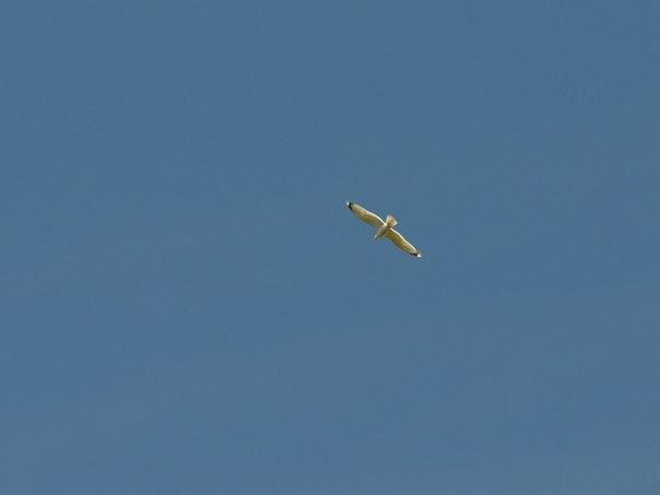 I побачу чайку я в польотi