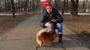 Кинолог увидела у собаки Абдулатипова повадки агента спецслужб