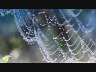 Туманные паутинки