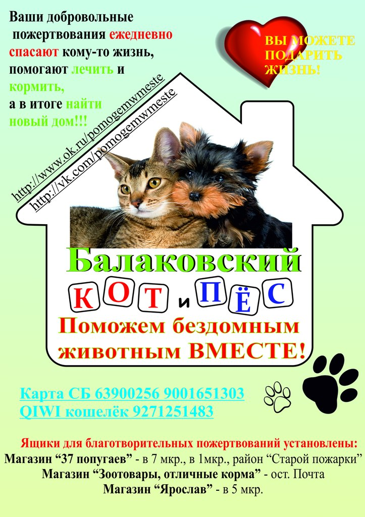 Кошки, собаки и проблема бездомных животных (38)