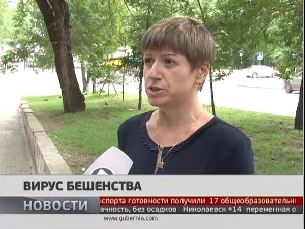 Очередной случай бешенства зафиксирован в Хабаровском районе. Новости 03072018. GuberniaTV