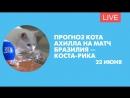 Прогноз кота Ахилла на матч Бразилия – Коста-Рика. Онлайн-трансляция