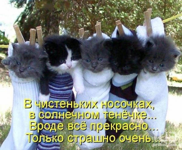 Близость смотреть фильм онлайн на русском