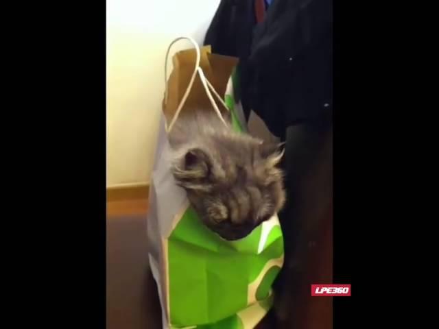 Pisica in sacosa