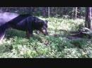 Собачка - любитель лесной ягоды )
