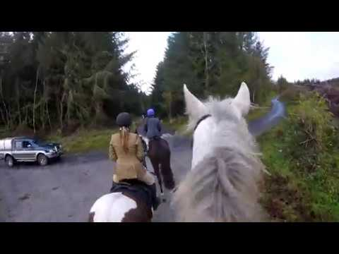 Hunting with Grallagh Harriers Nov 11th 2018.