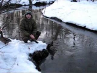 Подготовка подсадных уток к весенней охоте