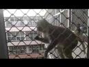 Вриндаванские банды макак. Дедовщина 😜 24.04.18