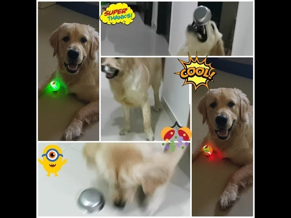 My dog Champ loves tingling sound n blinging ball and his funny reaction Relax My Dog