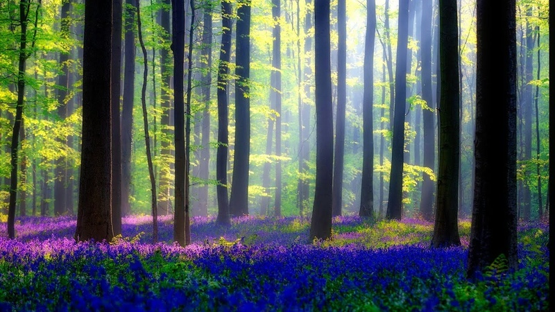 Relaxing Music for Stress Relief. Soothing Celtic Music for Meditation, Healing Therapy, Sleep, Yoga