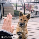 В истории цивилизации куда больше примеров верности собачьей, чем человеческой.