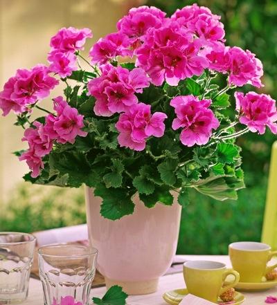 Цветы комнатные где купить перлит в гомеле доставка цветов из шаров по ногинску