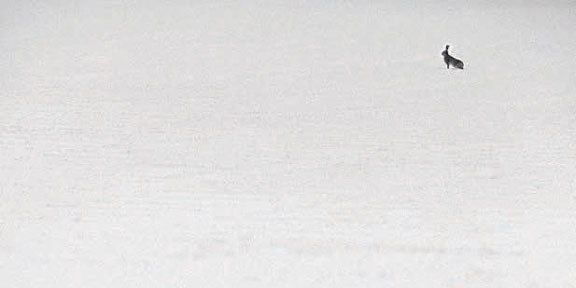 """(""""Жрать совсем нечего"""") Фото Мишель Оултремон"""