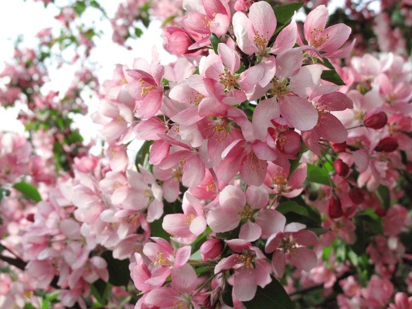 Spring time ... - Pagina 2 T5ZaC8vFIoI
