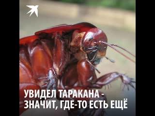 Увидел таракана – значит, где-то прячется еще 700