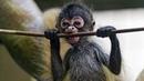 Смешные обезьяны Приколы про обезьян Funny monkeys 4 Прикольное видео с обезьянками