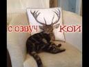 Приколы про котов с ОЗВУЧКОЙ от Domi Show – СМЕШНЫЕ коты и кошки 2018