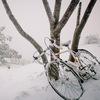 Первый бревет 2013 года - Зимние Лоси