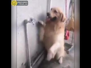 Умный пёсик нашёл выход, как спастись от жары