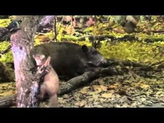 Музей дикой природы в Беловежской Пуще Беларусь 2 Wildlife Museum in Belovezhskaya Pushcha 2